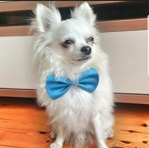Baby Blue Fashion  Bow Tie For Your Fur Baby